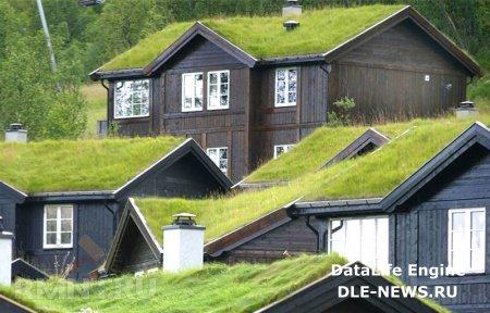 Обустройство сада и газона на крыше дома